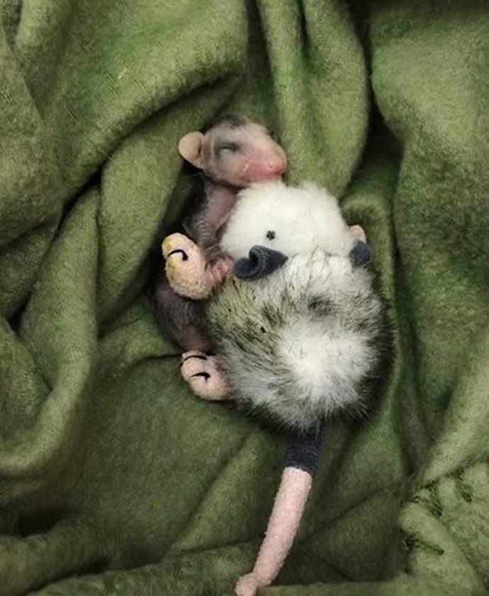opossum-2