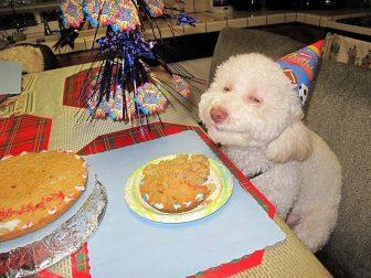 pets-birthday