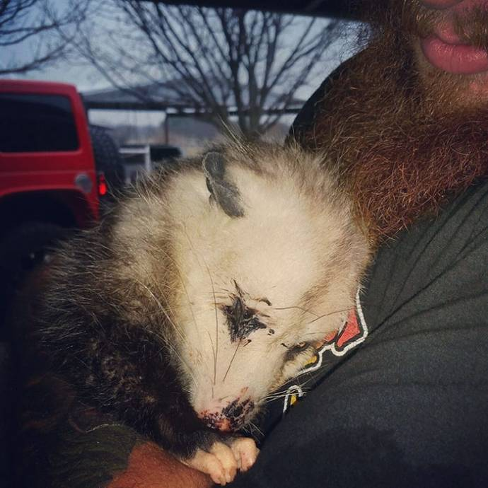 opossum рис 5