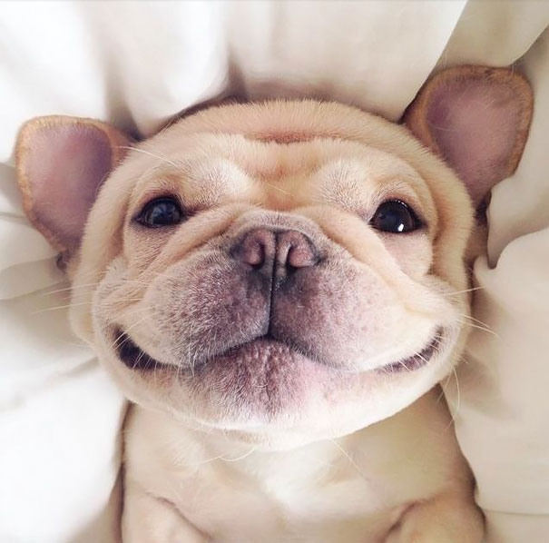 smiling-animals