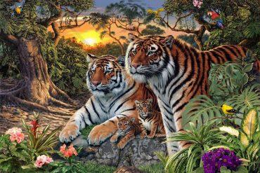 tigry (1)