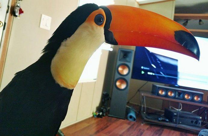 toucan14