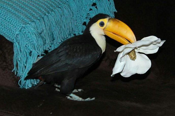 toucan21