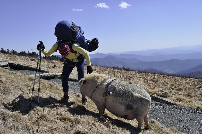 Ziggy the traveling piggy
