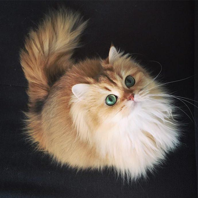 Кошка Смузи рис 3