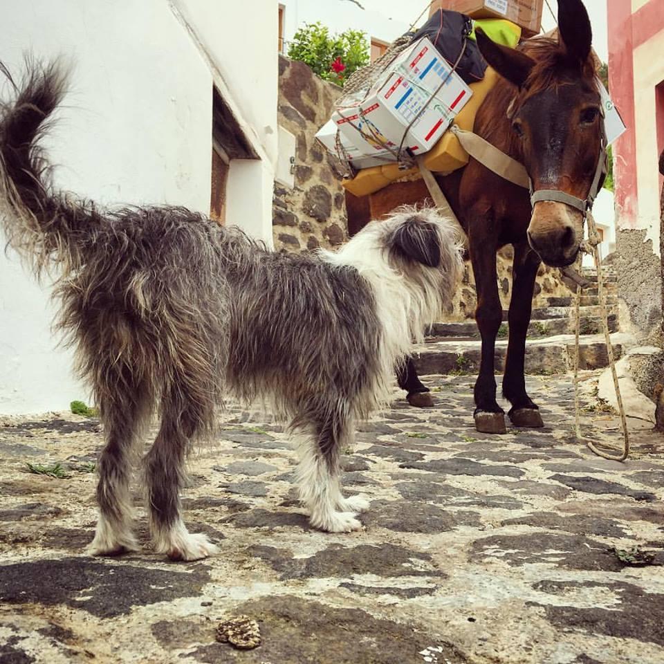 Испанец путешествует с собакой на лодке рис 8