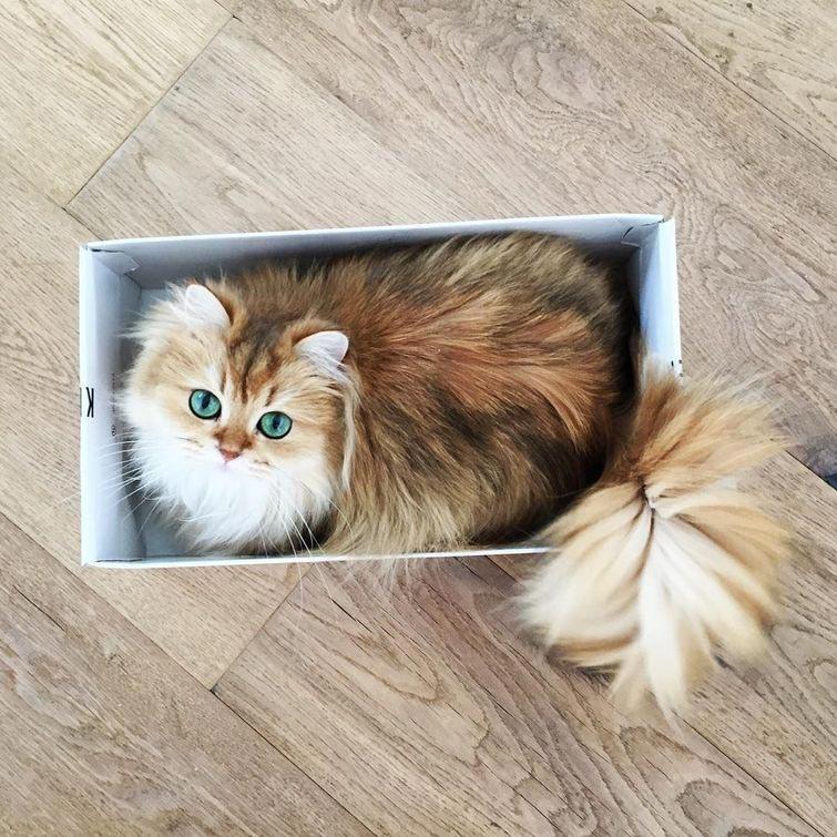 Кошка Смузи рис 9