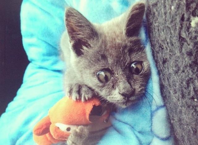 Самый удивленный кот в мире рис 2