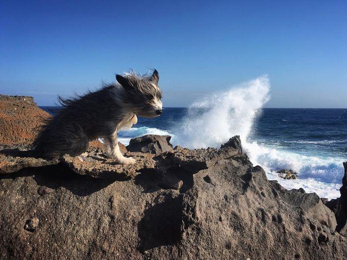 Испанец путешествует с собакой на лодке рис 4