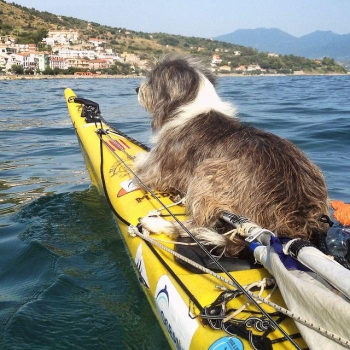 Испанец путешествует с собакой на лодке рис 3