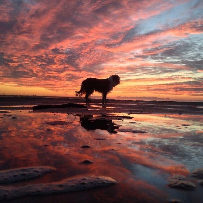 Испанец путешествует с собакой на лодке рис 9
