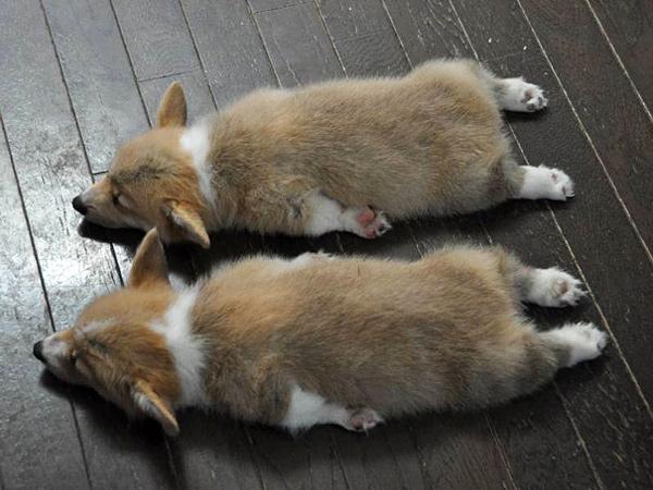 animal-twins (1)