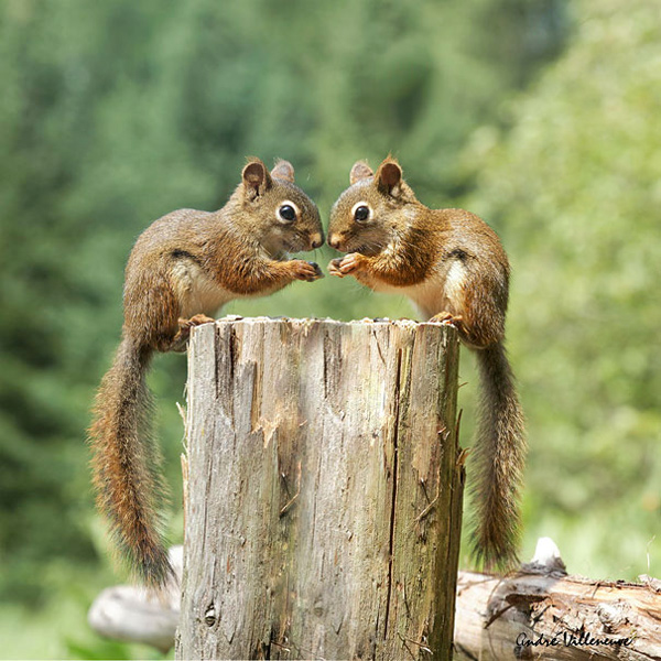 animal-twins (2)