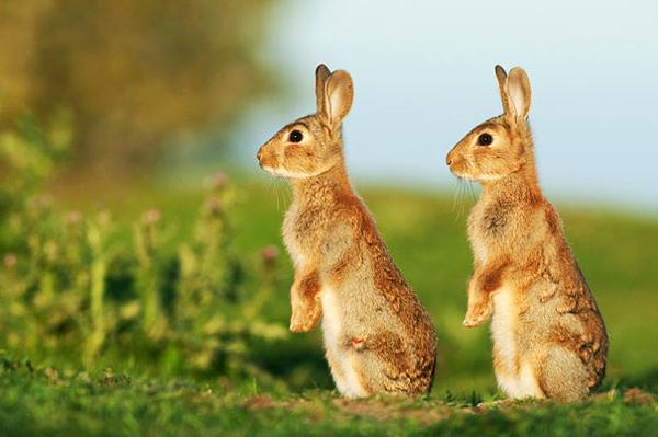 animal-twins (3)