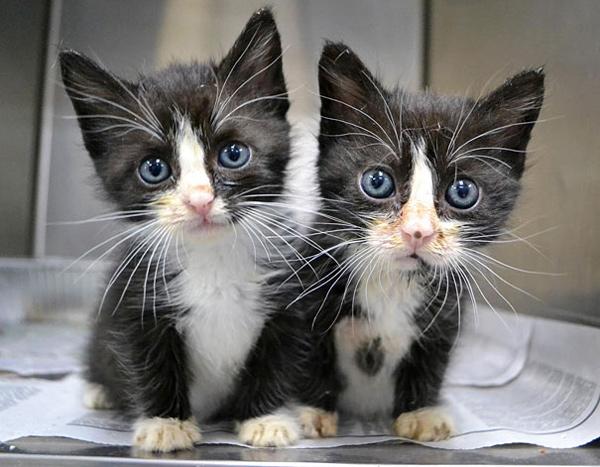 animal-twins (5)