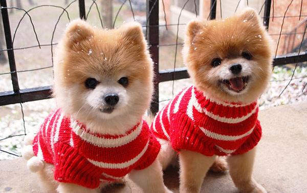 animal-twins (7)