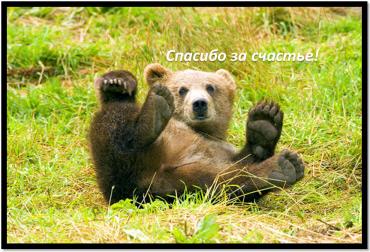 bear-a