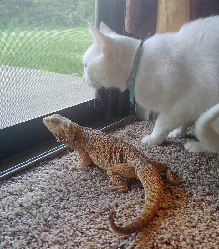 Котенок и ящерица лучшие друзья рис 6