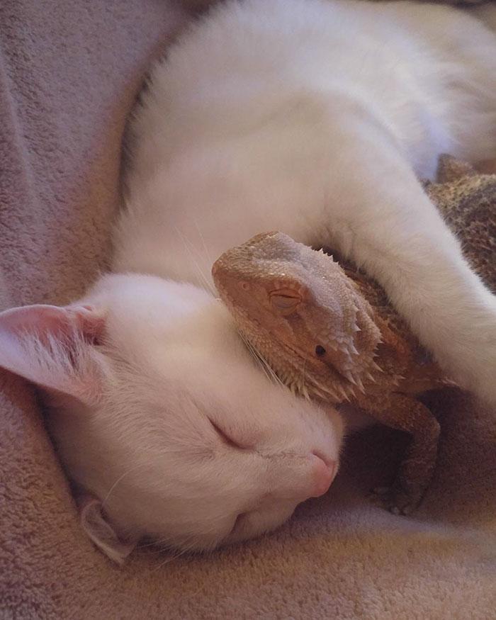 Котенок и ящерица лучшие друзья рис 3