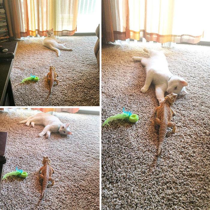 Котенок и ящерица лучшие друзья