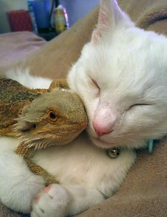 Котенок и ящерица лучшие друзья рис 2