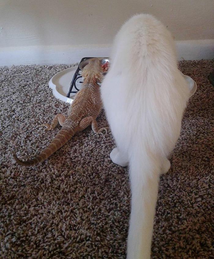Котенок и ящерица лучшие друзья рис 7