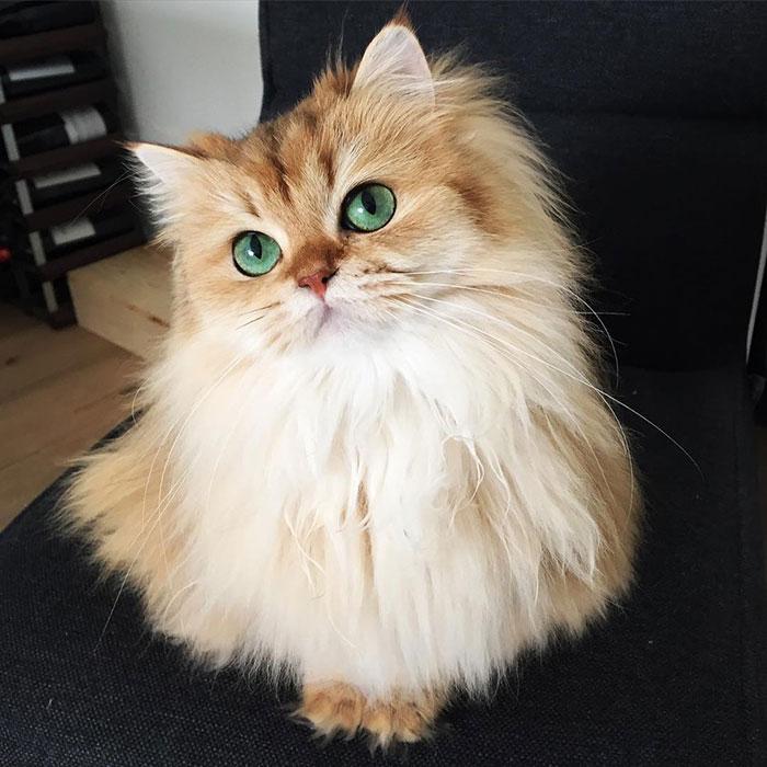 Кошка Смузи