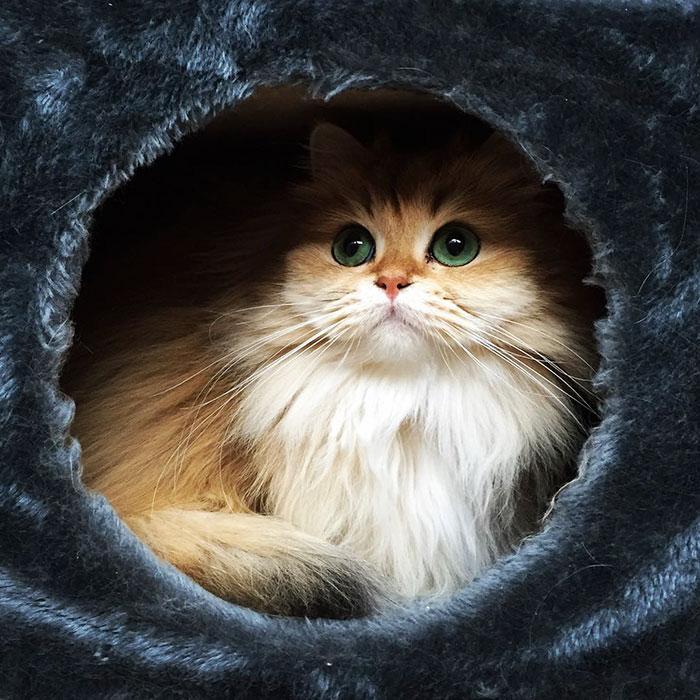 Кошка Смузи рис 8