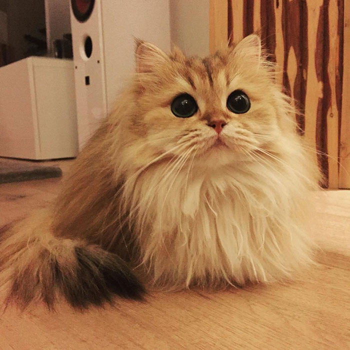 Кошка Смузи рис 4