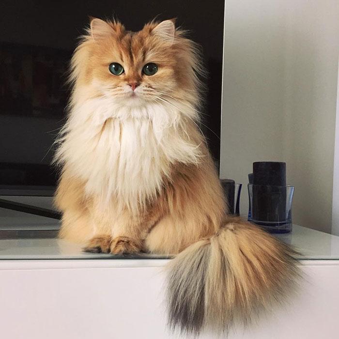 Кошка Смузи рис 7