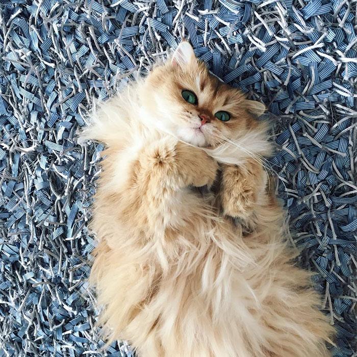 Кошка Смузи рис 6