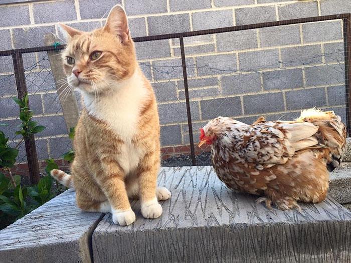 blind-chicken-dog-friends-mumble-1