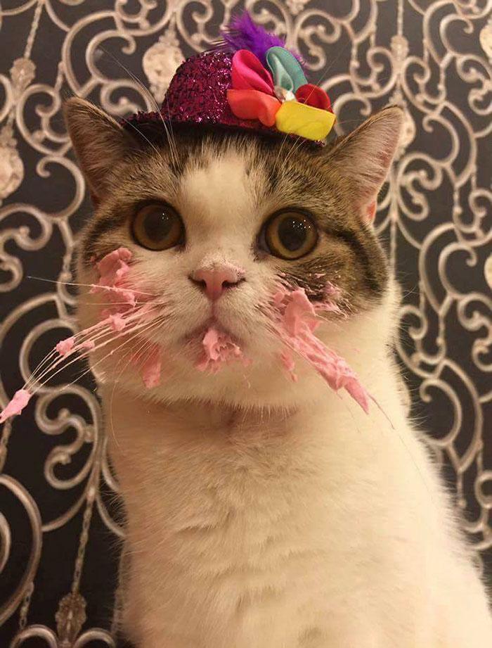 Кот и торт