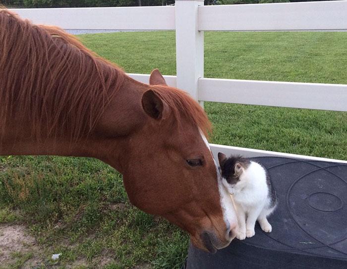 Кот подружился с лошадью