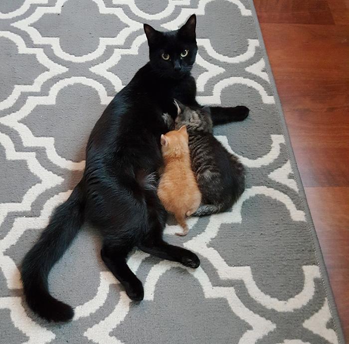 Коп спасает котенка