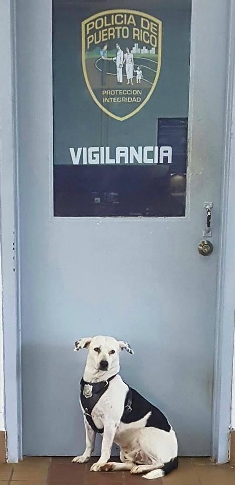 Бездомная собака получила работу в полиции