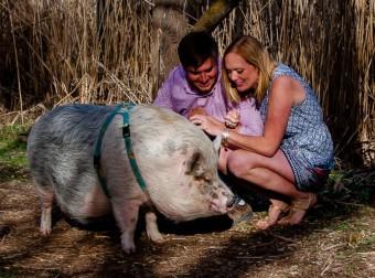Загадочная история минипига Зигги: первый свин-путешественник!
