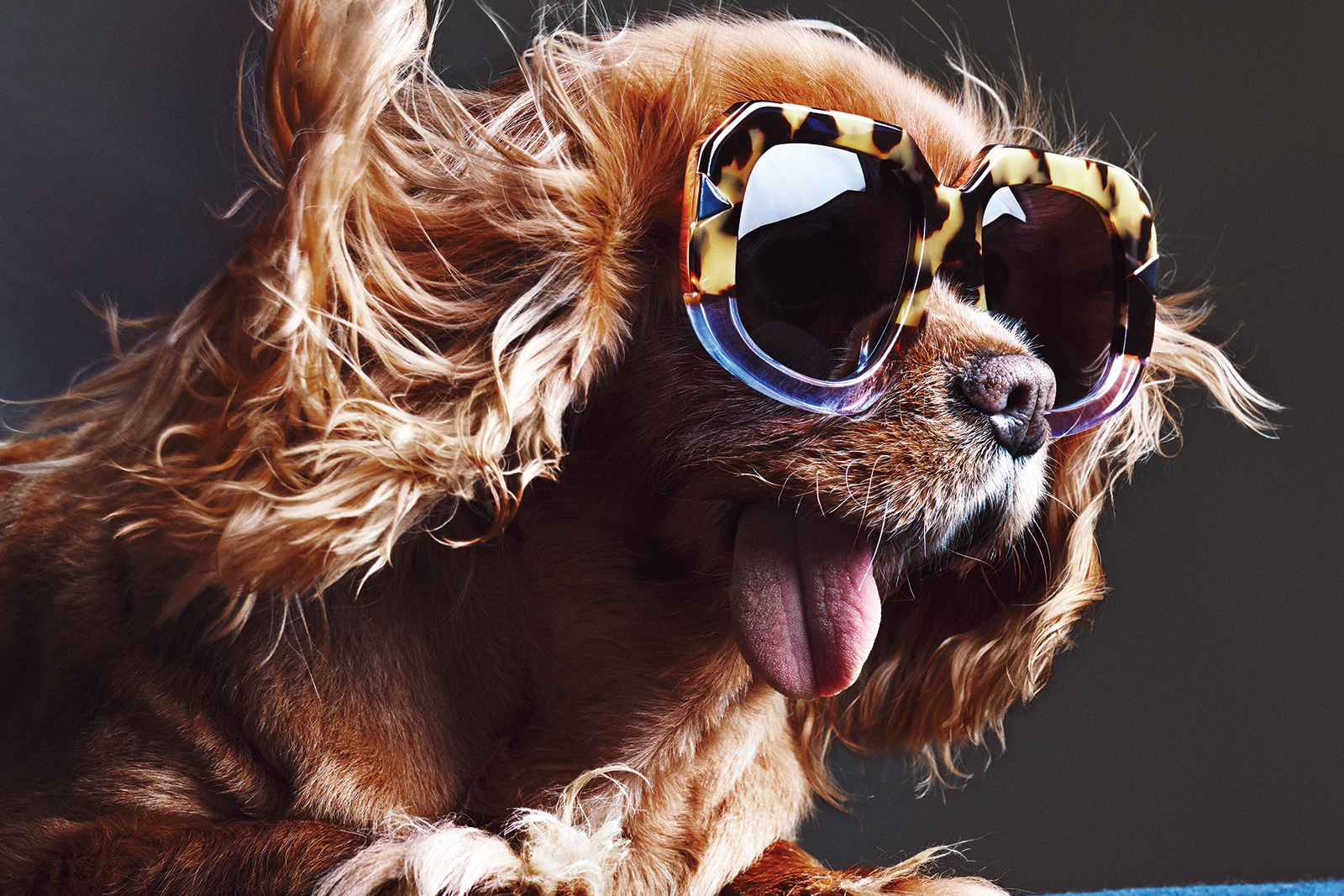 Картинка с псом в очках, бабушек