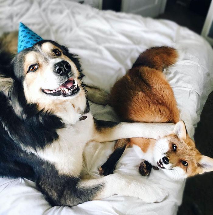 Лиса и пес лучшие друзья рис 6