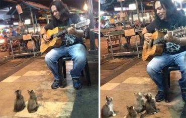 kotyata-i-muzykant