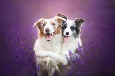 Сказочные фото собак