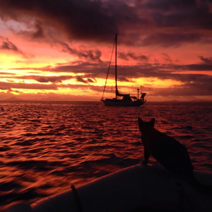 Кошка путешествует на яхте