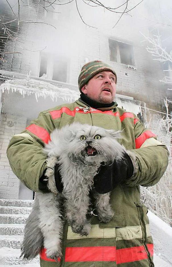 saving-pets (10)