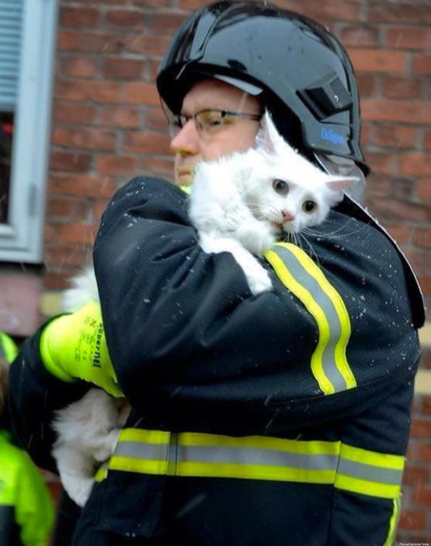 saving-pets (12)