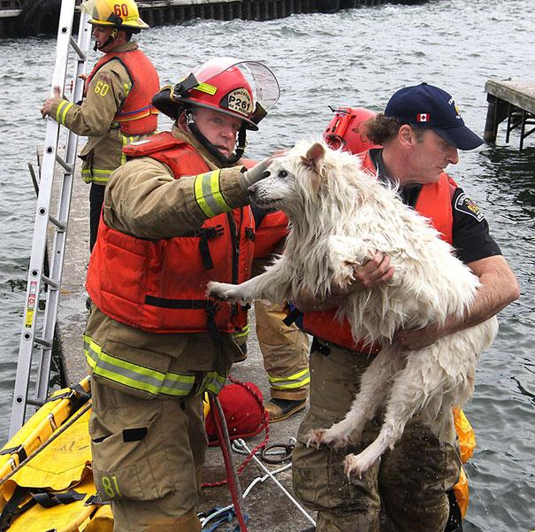 saving-pets (4)