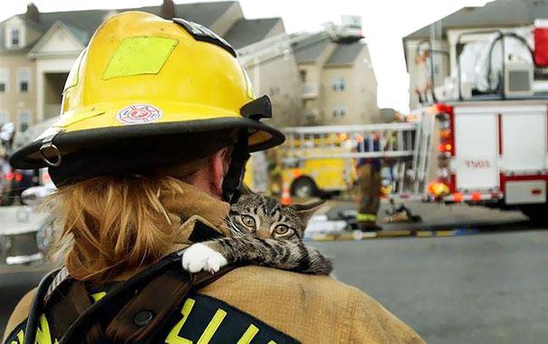 saving-pets (8)