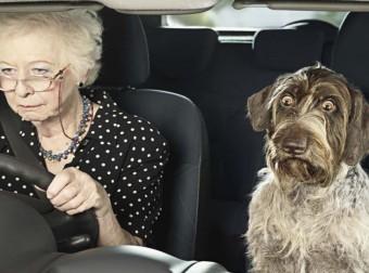 Я в шоке: 15 фото ну очень удивленных собак