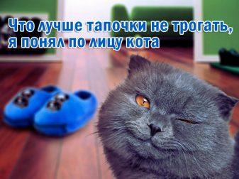 stihi-pro-kotov