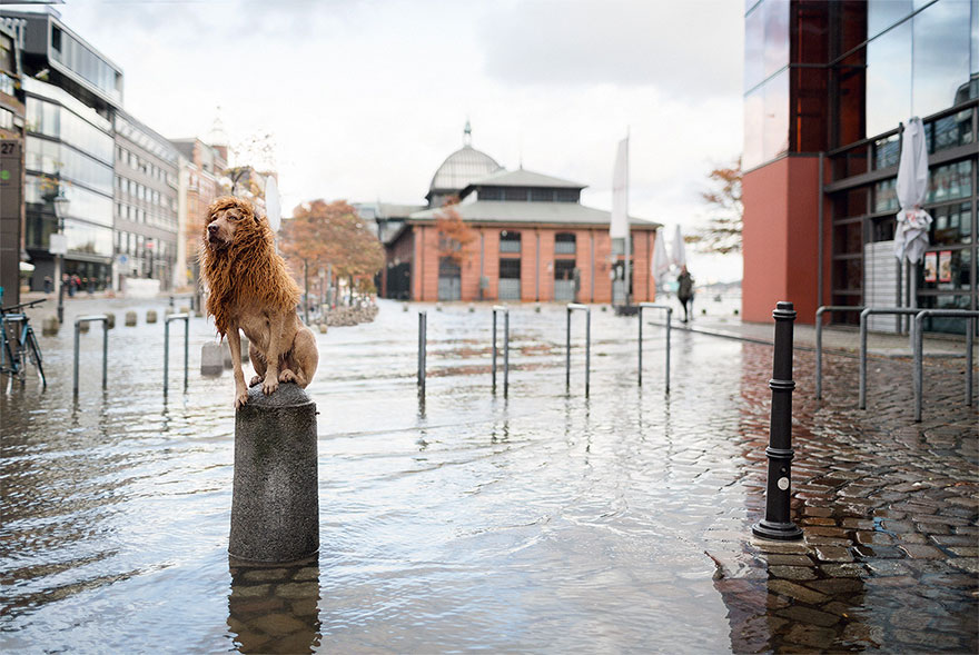 stray-dog-big-city-lion-grossstadtlowe-julia-marie-werner-16 (1)