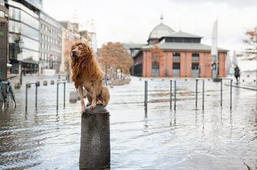 stray-dog-big-city-lion-grossstadtlowe-julia-marie-werner-16